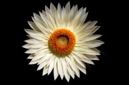 daisy1